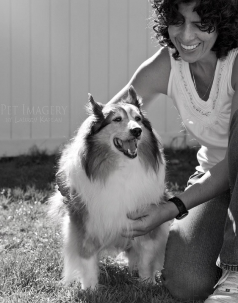 collie sheltie levittown pa