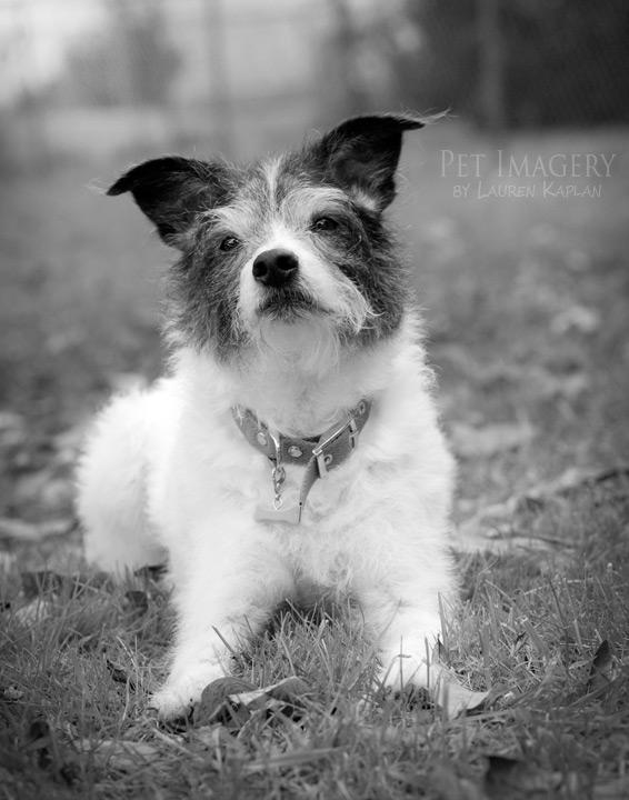 Harry the Terrier Mix - AllMutt.com