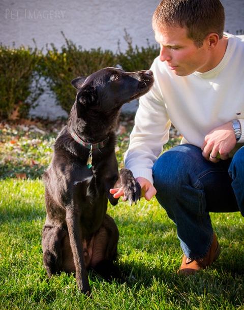 black lab mix puppy pa kaplan photography