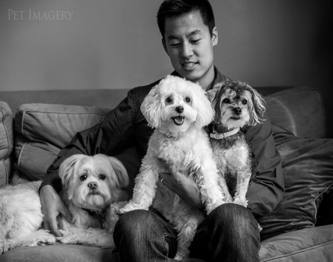 small dog breed kaplan pet photography pa