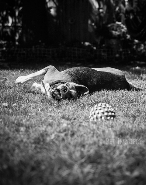 best pet photography pa pet imagery