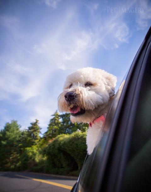 best pet photography kaplan pet imagery