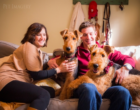 airedale terriers philadelphia pet photography kaplan