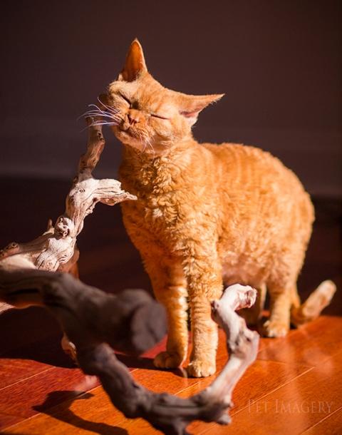 best pet photography cat kaplan pa
