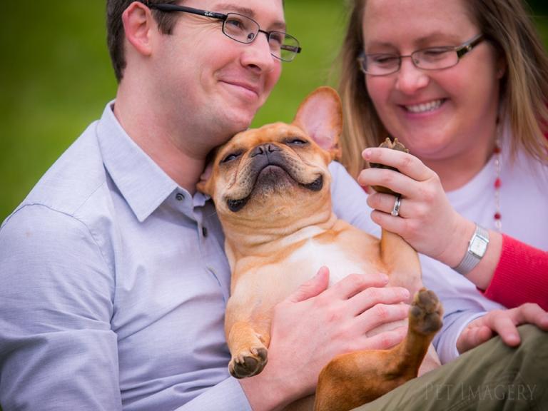 pet photography french bulldog pa kaplan
