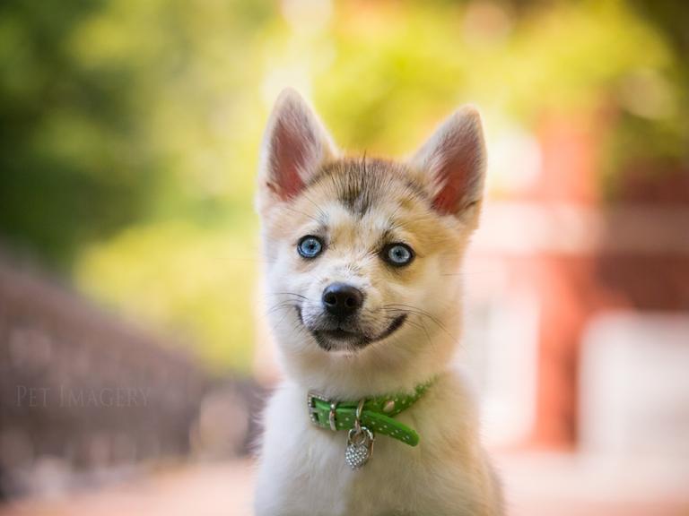 new pet photography kaplan