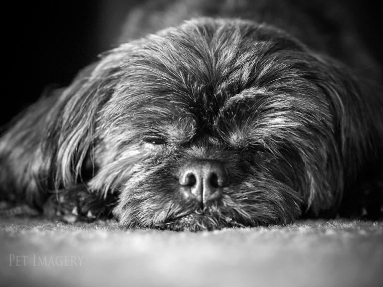 best pet photography dog pa