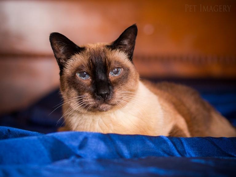 best pet photography cat kaplan
