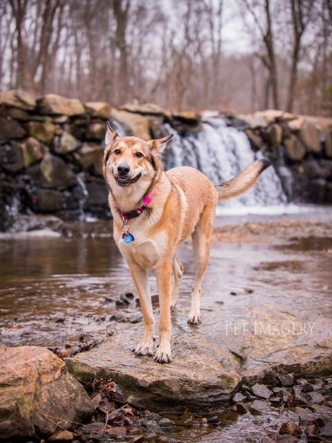 best pet photography kaplan