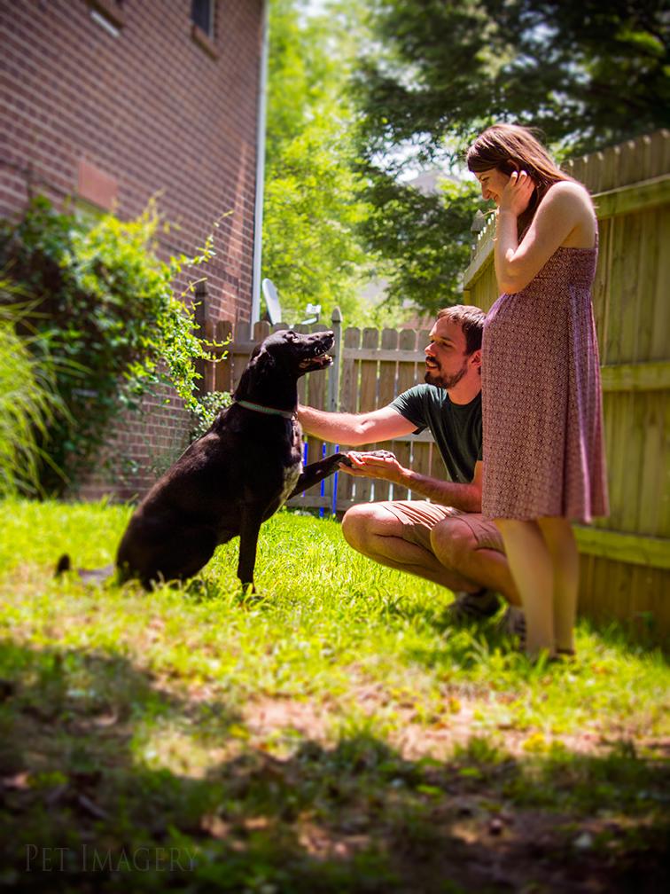 best dog pet photography kaplan