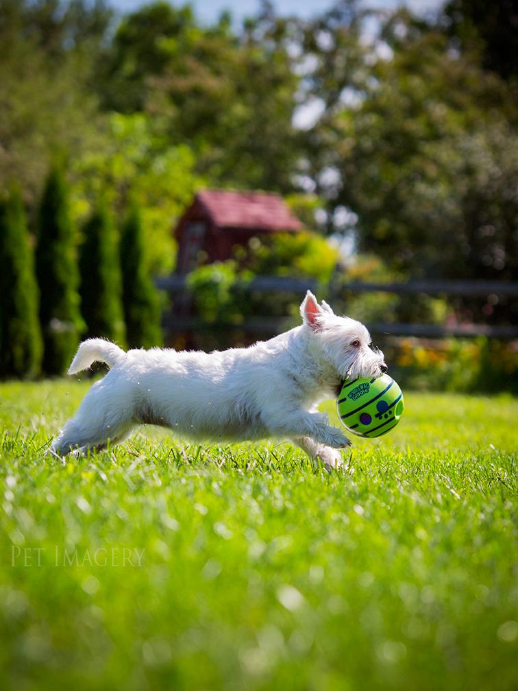 best pet dog photography kaplan