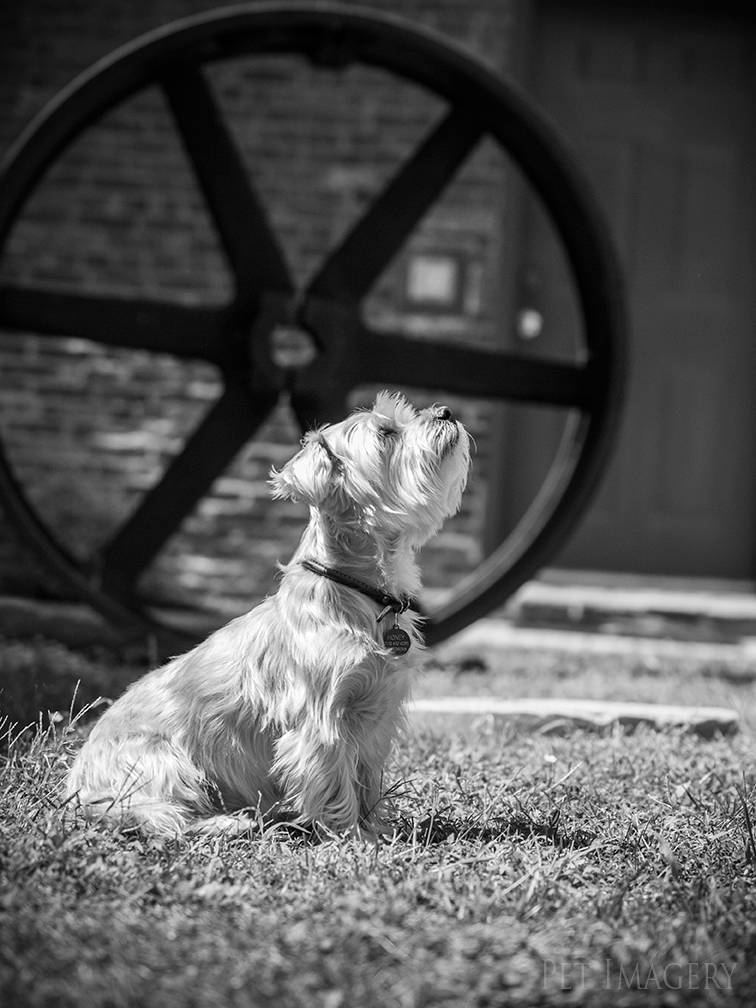 best pet dog photography pa kaplan