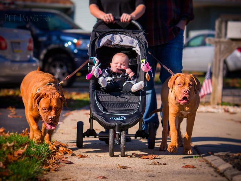 best pet baby photography kaplan