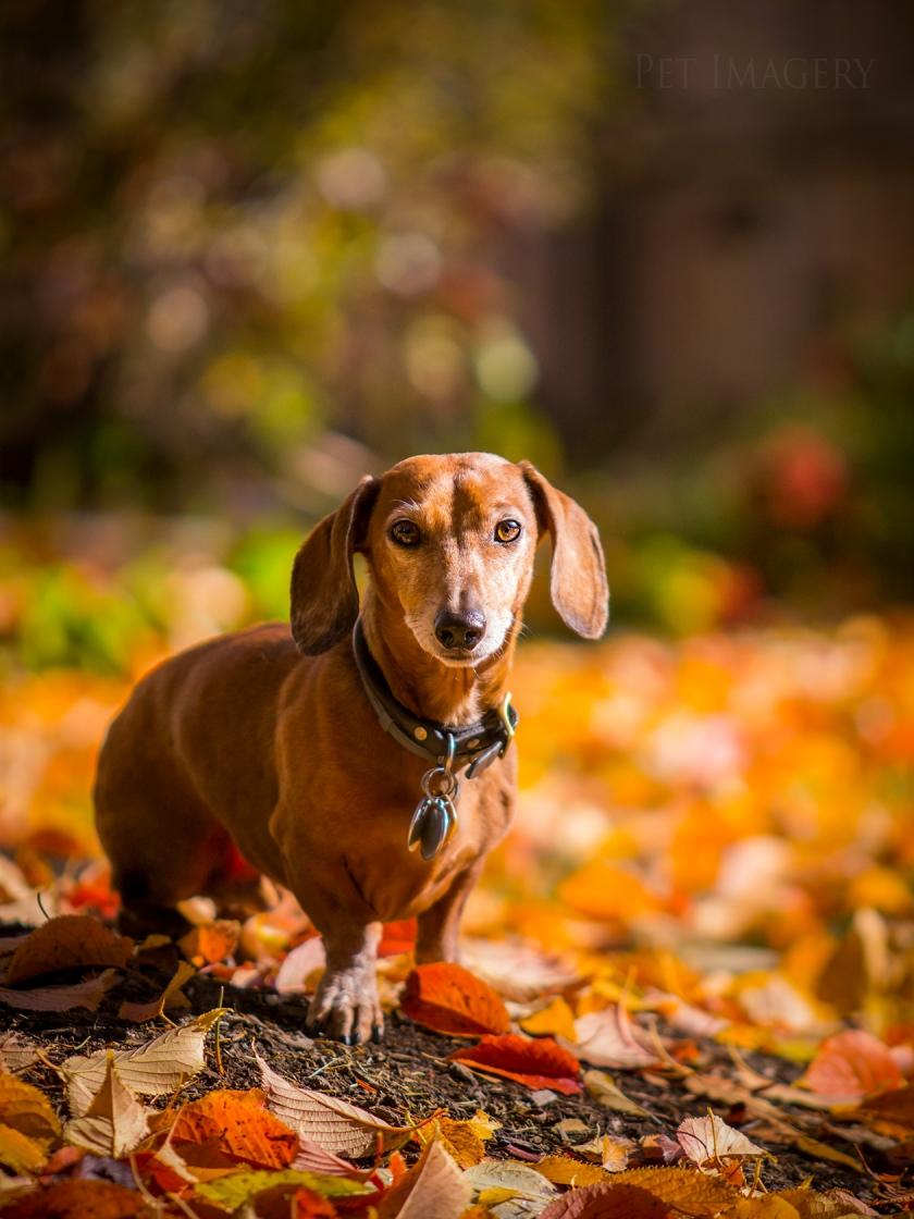 best pet photography kaplan dog