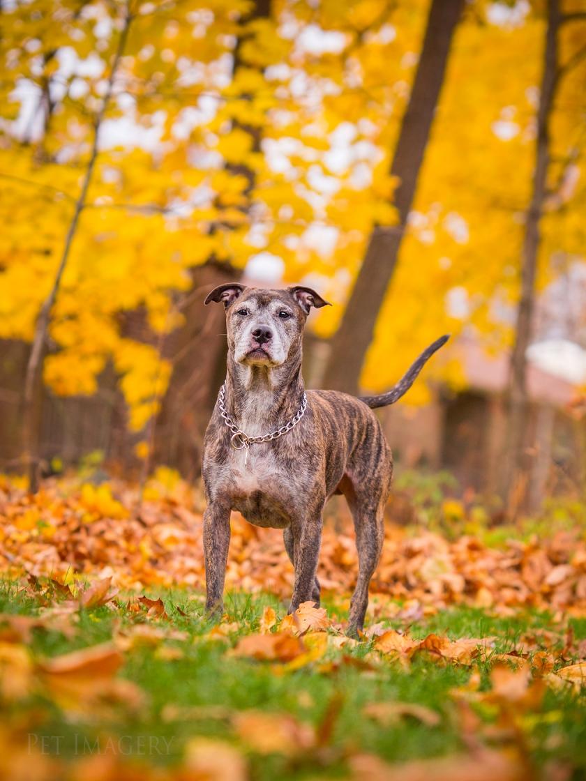 best dog photography