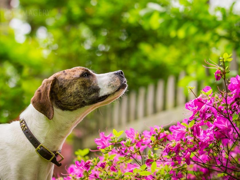 best pet photography