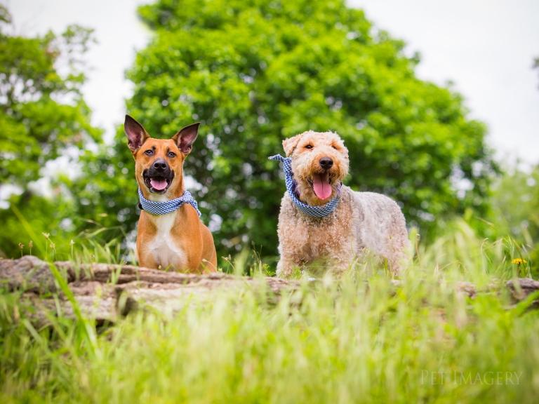Dog Park Broomall Pa