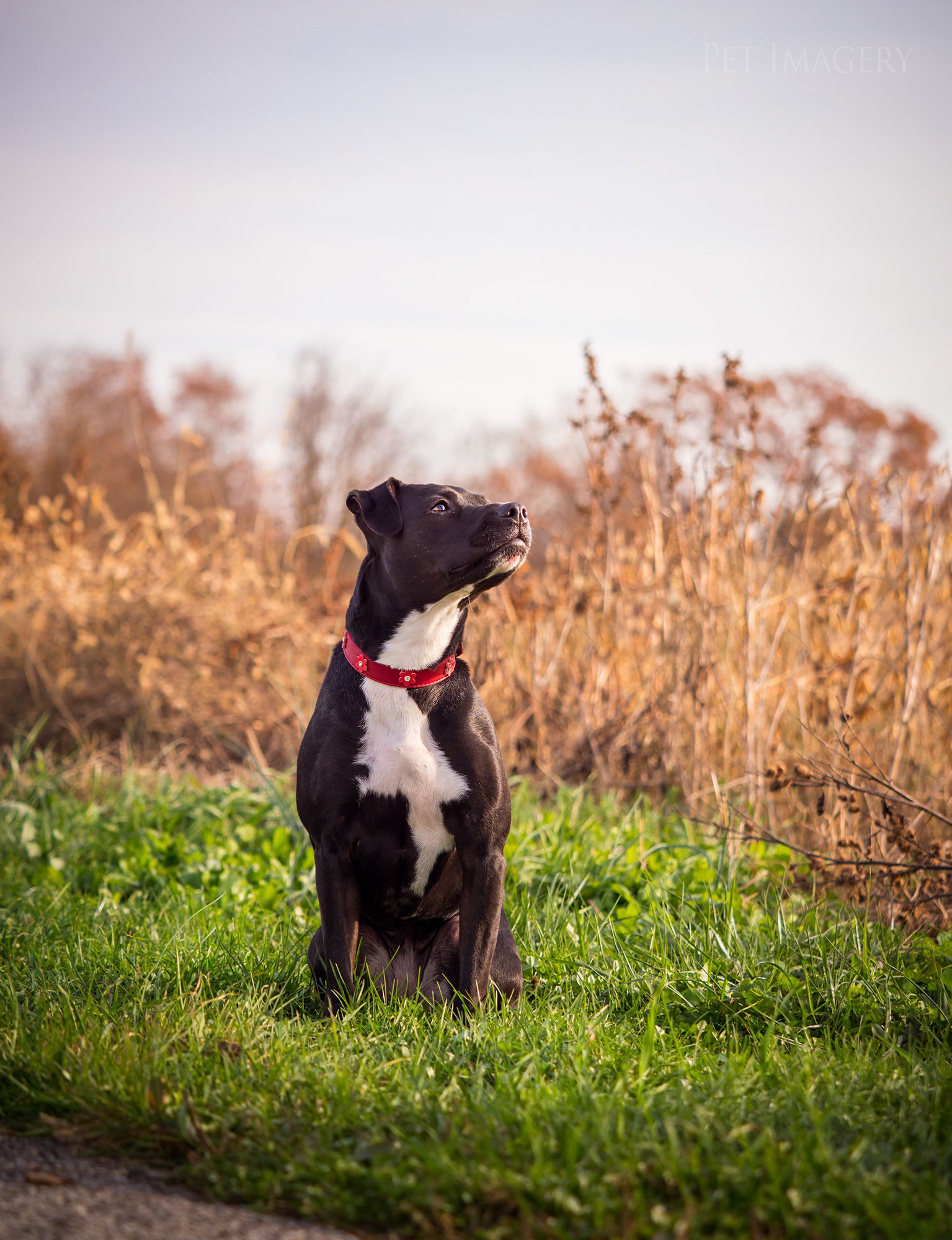 Pet Imagery by Lauren Kaplan Photography
