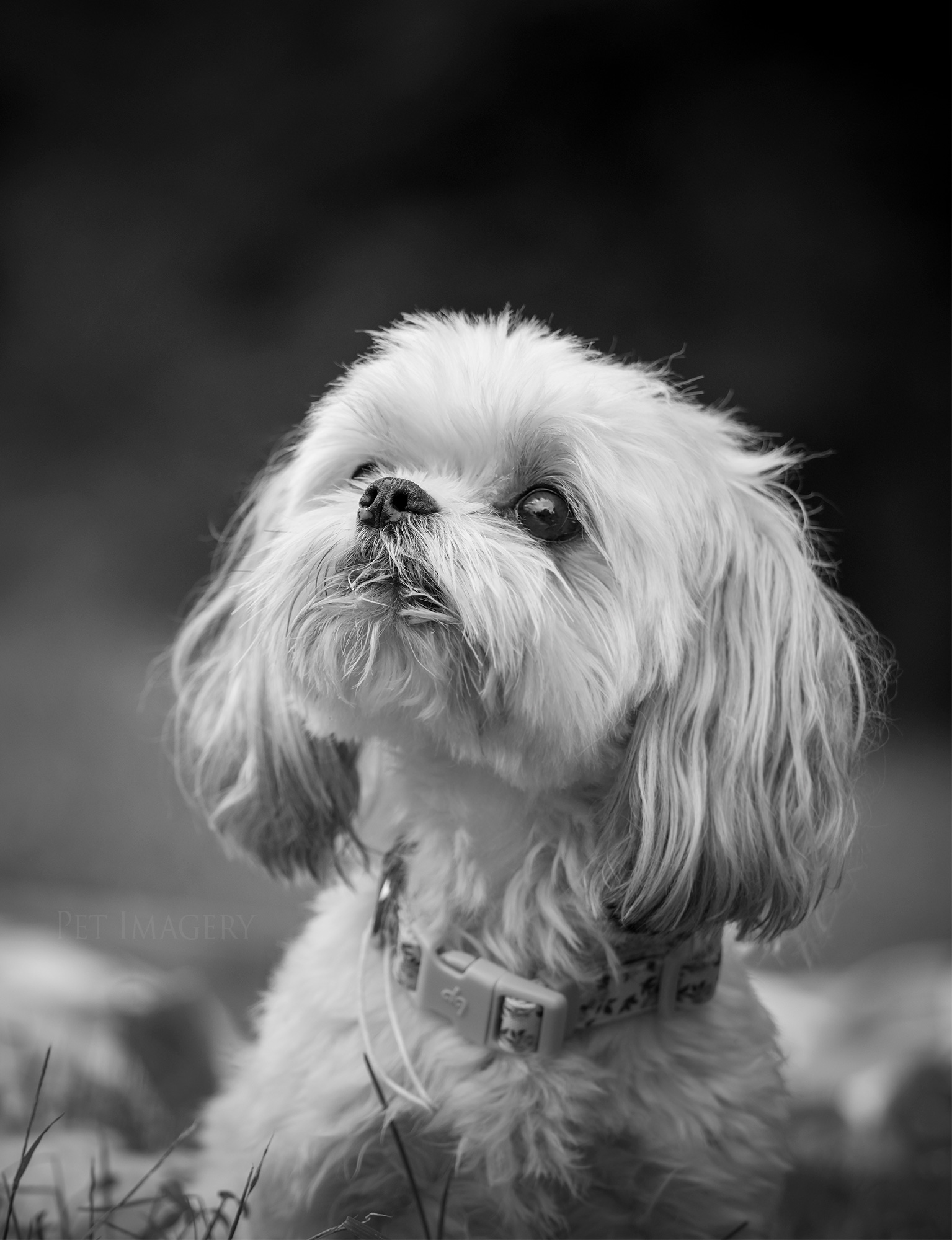 Pet Imagery by Lauren Kaplan Photography