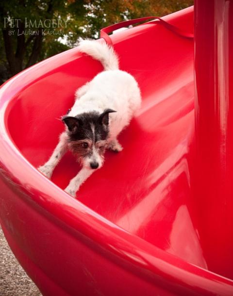 terrier mix playground pa slide