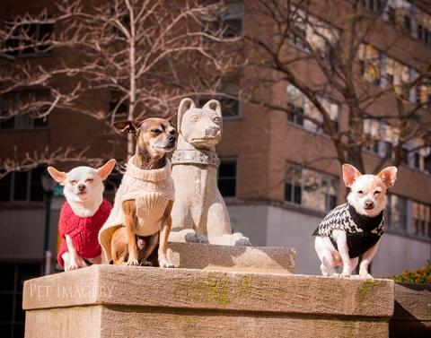 chihuahua, best pet photography, kaplan, pa