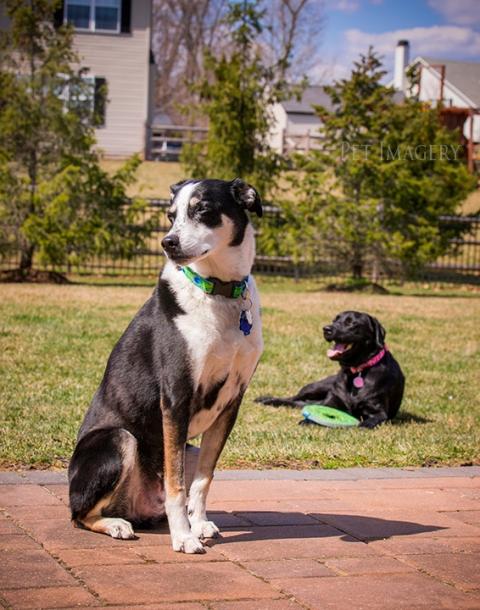 pet imagery best pet photography kaplan