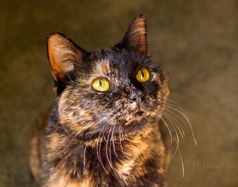 best cat photography kaplan