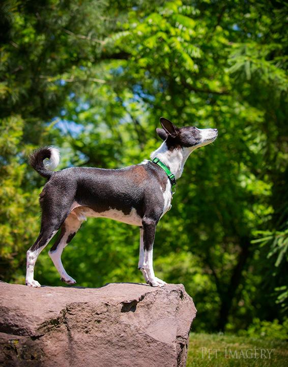best pet photography pa dog