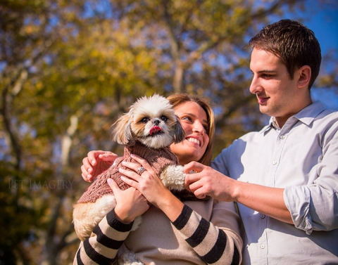 best pet photography shih tzu kaplan ny