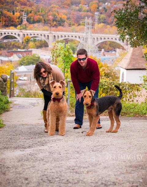 airedale terriers philadelphia pet photography kaplan