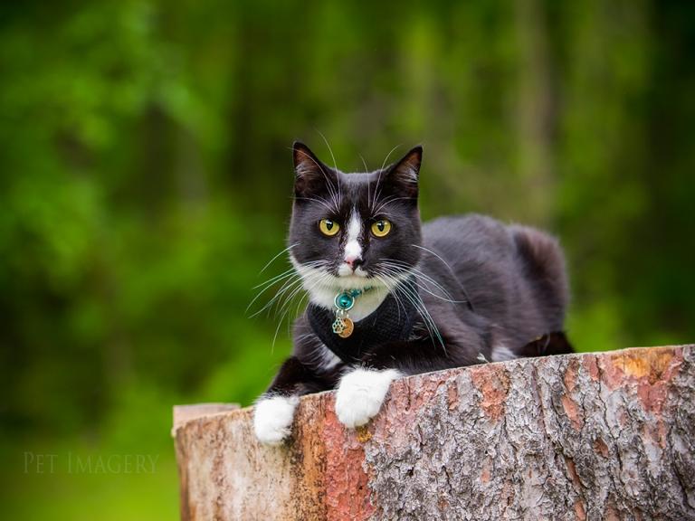 best pet photography cat pa