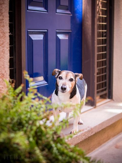 buddy at the door