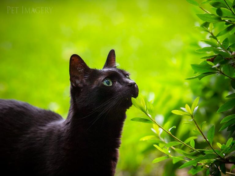 pet photography kaplan