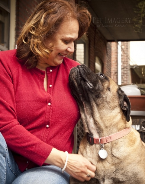 bull mastiffs pet photography, Philadelphia, PA 1
