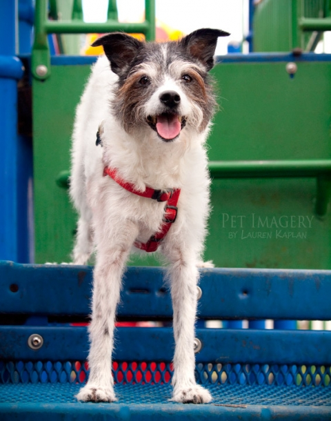 terrier mix mutt playground langhorne