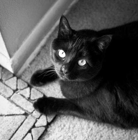 black cat philadelphia