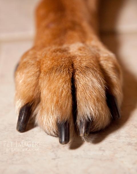 mixed breed dog pet imagery philadelphia pa