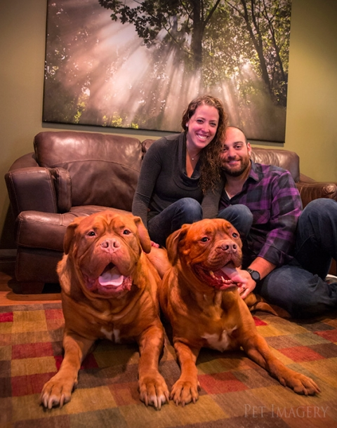 french mastiff kaplan best pet photography pa