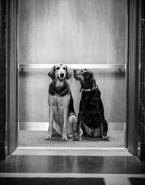 coonhound-best-pet-photography-kaplan