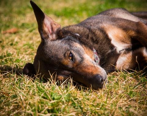 pet-photography-kaplan
