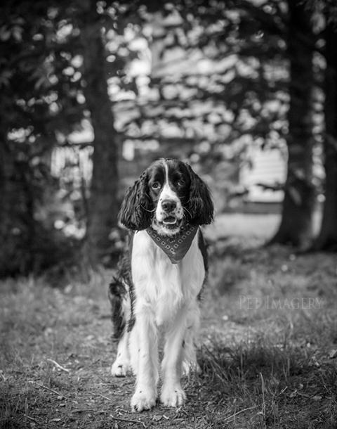 best pet photography kaplan pa