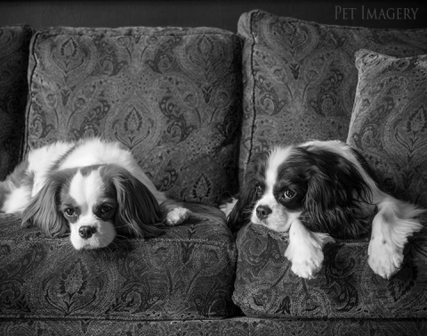 best pet photography pa kaplan