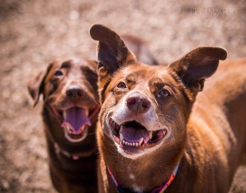 pet imagery kaplan best pet photography