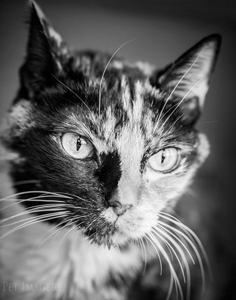 best pet photography pet imagery kaplan pa
