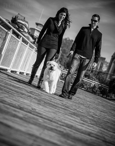 best pet photography kaplan pet imagery pa