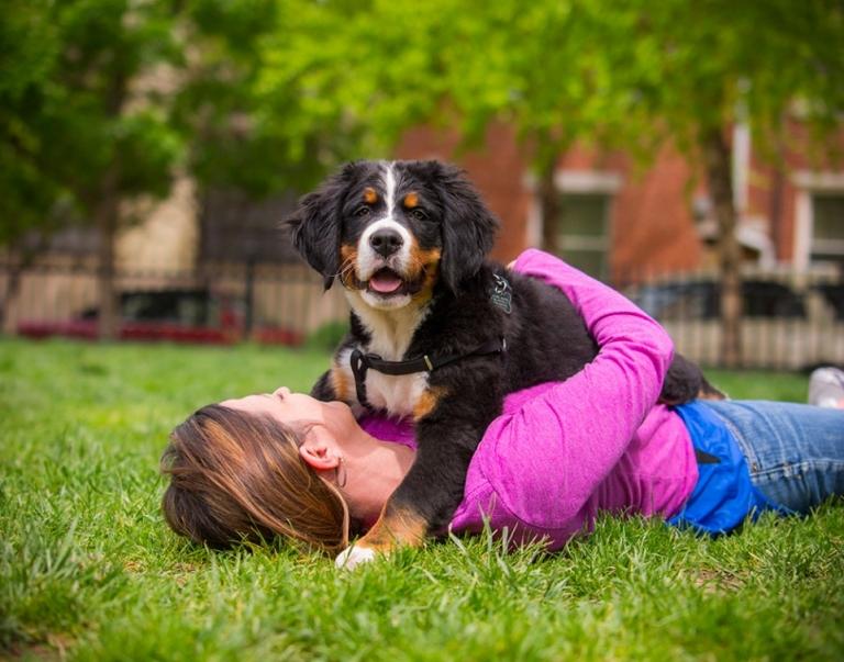 bernese mountin dog pet photography kaplan