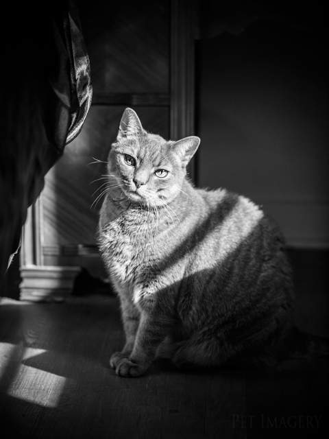 best pet photography cat kaplan
