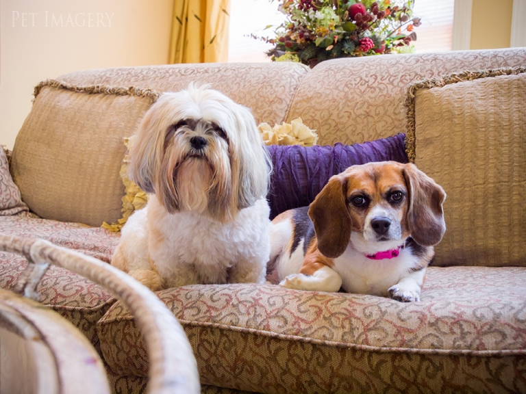 best dog photography kaplan pet imagery