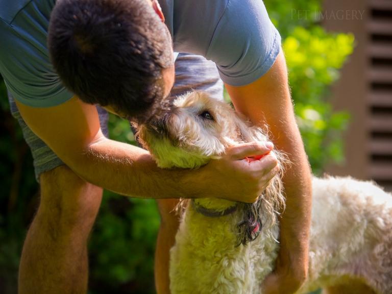 pet imagery best pet photography