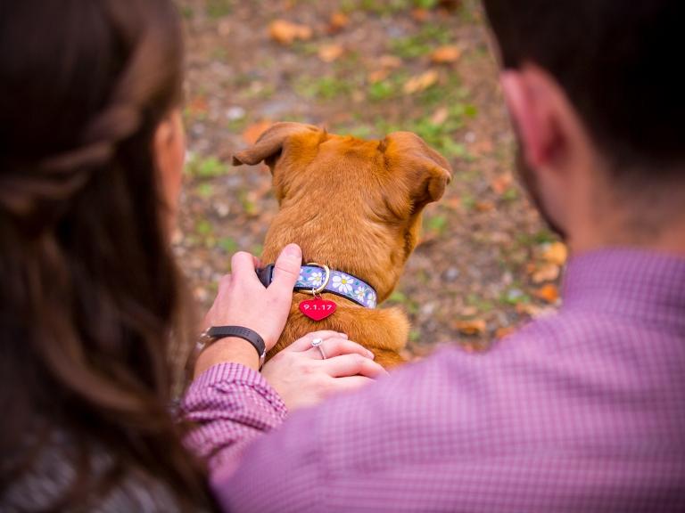 engagement session pets kaplan